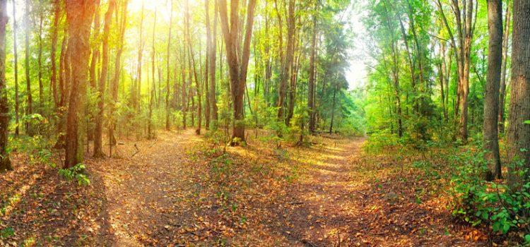 La Forêt Domaniale